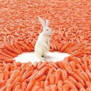 Recompensa vs. rendimiento; los ojos en la zanahoria