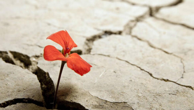 Resiliencia ¿una palabra de moda o una herramienta de vida?